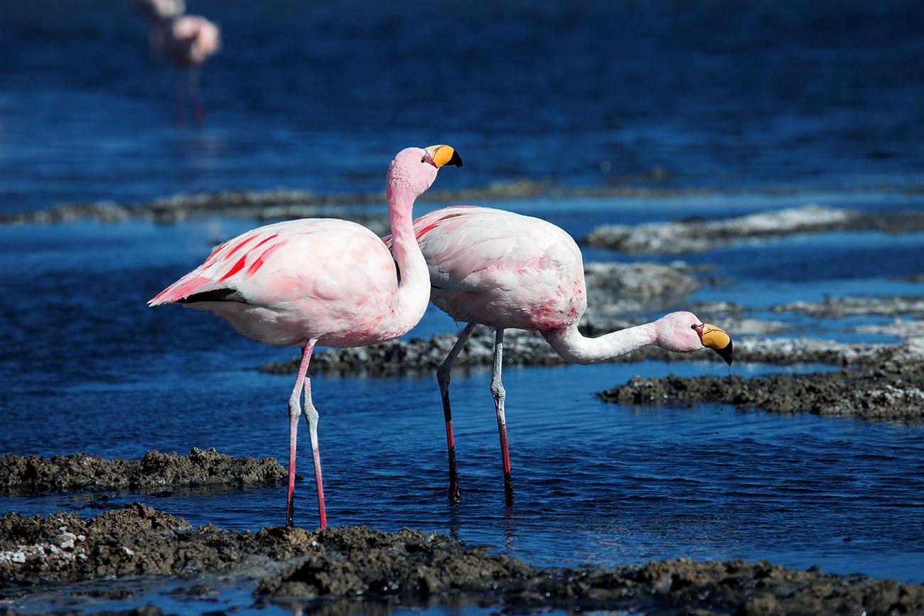 bolivien_canapa_flamingos_1300