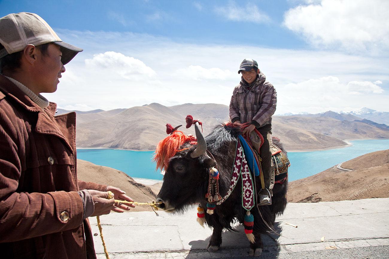 tibet_yak_1300